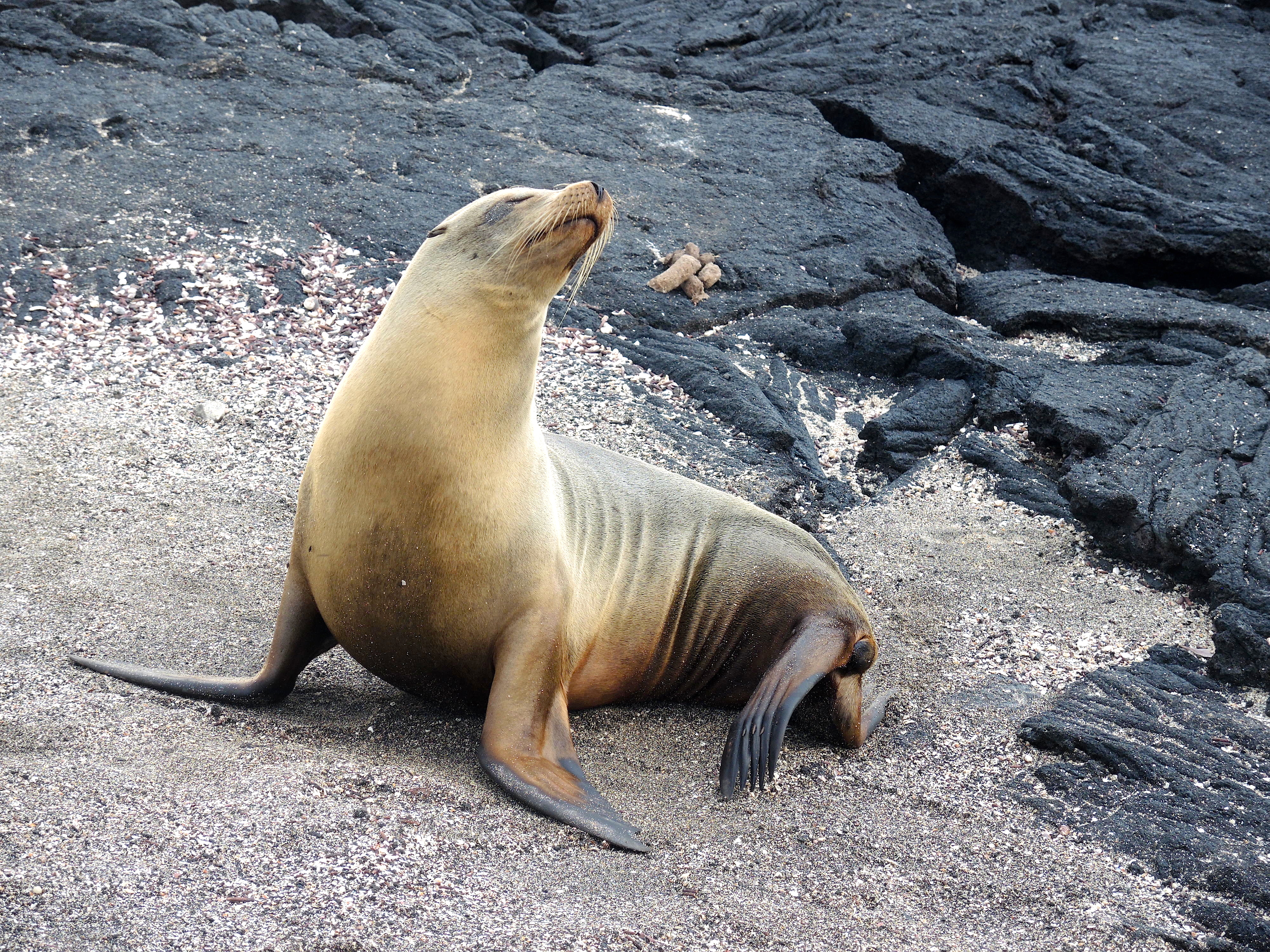 Galapagos: Sea lions, oh my …. | Traveling Light